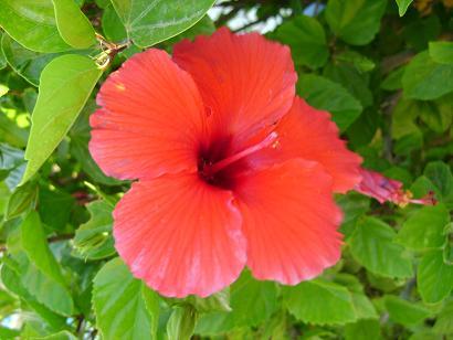 Название:  цветок.JPG Просмотров: 430 Размер:  41,1 Кбайт
